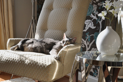 Pet lying on upholstered furniture