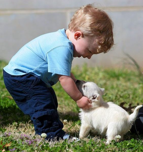 Tips For Picking Your Child's First Pet