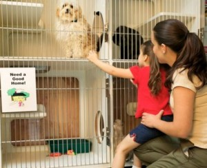 pet-adoption-centers