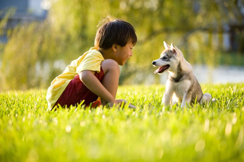 raising a pet with kids